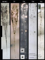 Materiale cometario conficcatosi nell'aerogel delal Stardust