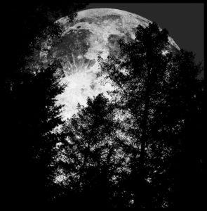 La luna sorge dietro agli alberi - Copyright degli aventi diritto