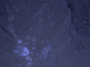 Foto notturna di Curiosity - Una roccia marziana illuminata da un LED ultravioletto -  Credits: NASA/JPL-Caltech/MSSS