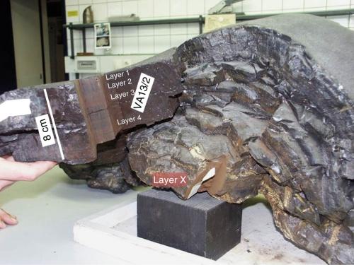 Campione di crosta terrestre composto principalmente da ferro e manganese,  con uno spessore di 25 cm, risalente al 1976 e proviente dall'Oceano Pacifico ( profondità 4830 m). Si possono vedere alcune parti utilizzate per questo studio: gli strati 1-4 di idrogenati e lo strato X di origine idrotermale, che ha cominciato a crescere circa 65 milioni di anni fa. -  Credits: A. Wallner et al. 2015